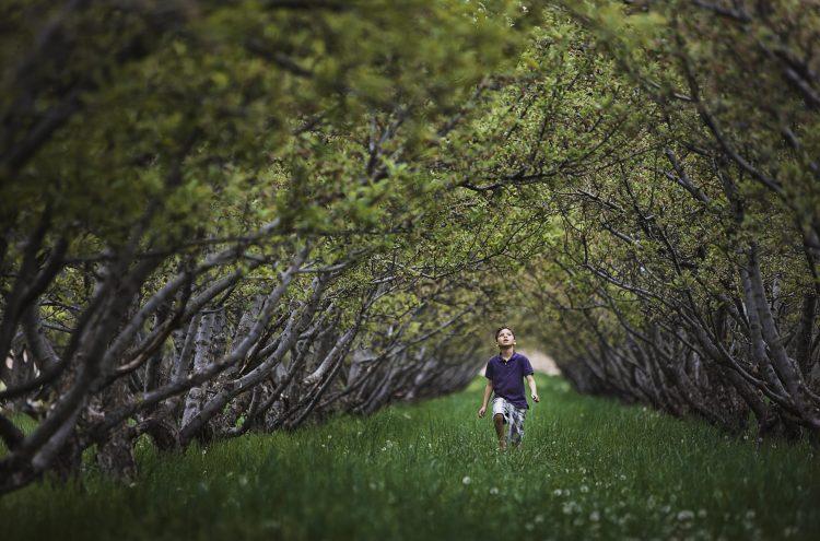Restoring the Sanctity of Forest: Plant a Caretaker