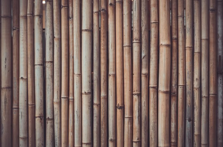 A World Built In A Grove: A Series On Bamboo Interventions — III