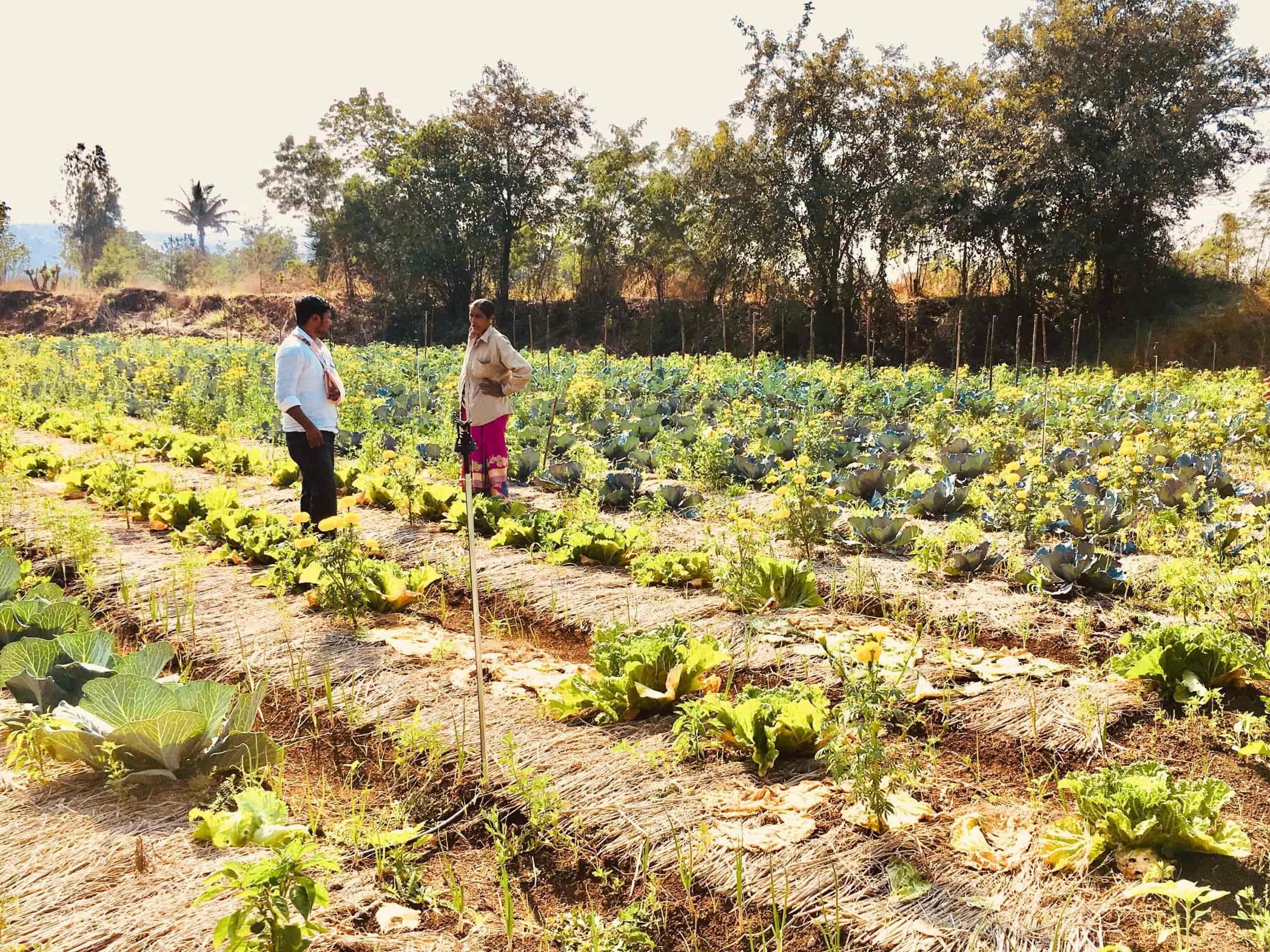 Natural Farming Portfolio